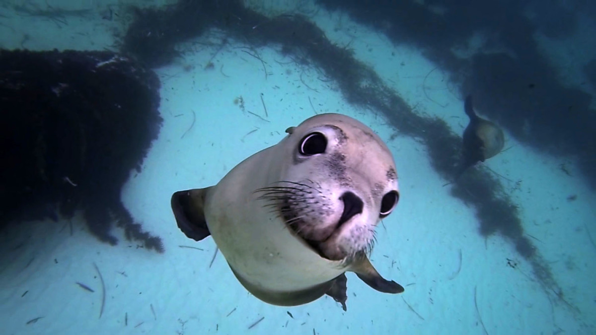 amazing animal selfies national geographic for everyone