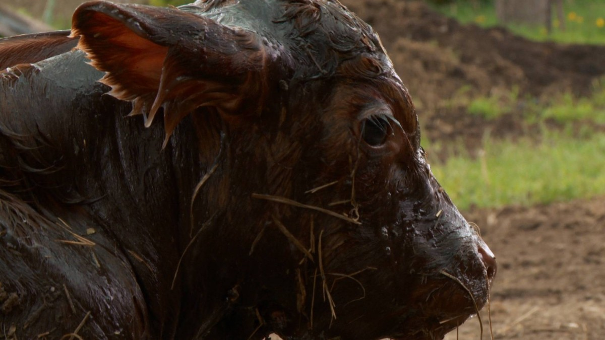 The Incredible Dr  Pol - National Geographic for everyone in
